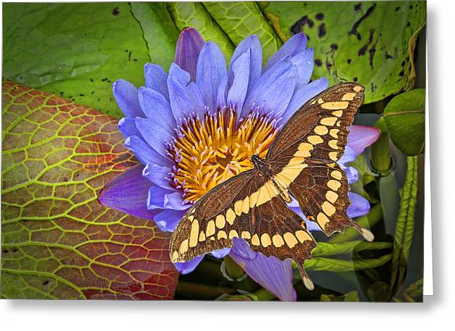 Wishes Greeting Cards - Butterfly and Lily Greeting Card by Rudy Umans