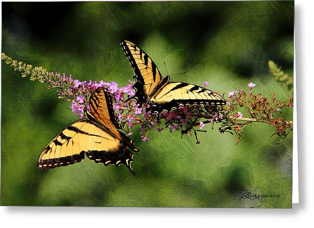 Tiger Swallowtail Digital Art Greeting Cards - Butterfly and Texture - featured in Photography/Textures and Wildlife Groups Greeting Card by EricaMaxine  Price