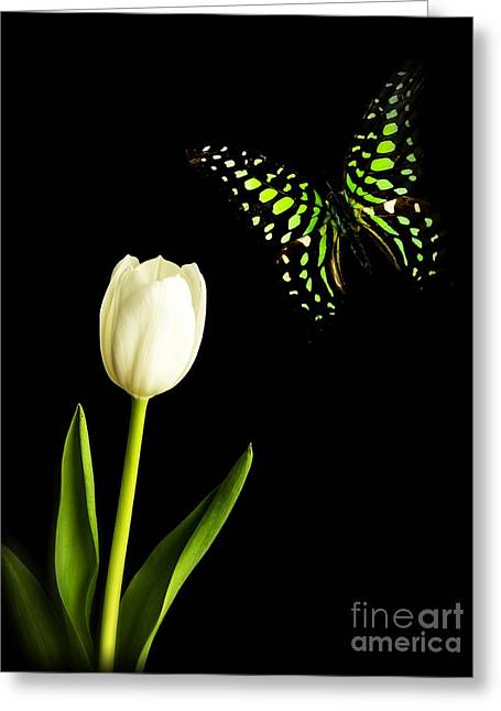 Beautiful Photographs Greeting Cards - Butterfly and Tulip Greeting Card by Edward Fielding