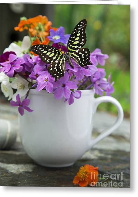 Butterfly And Wildflowers Greeting Card by Edward Fielding