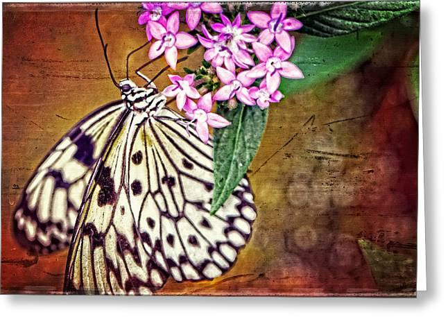 Powder Room Greeting Cards - Butterfly Art - Hanging On - By Sharon Cummings Greeting Card by Sharon Cummings