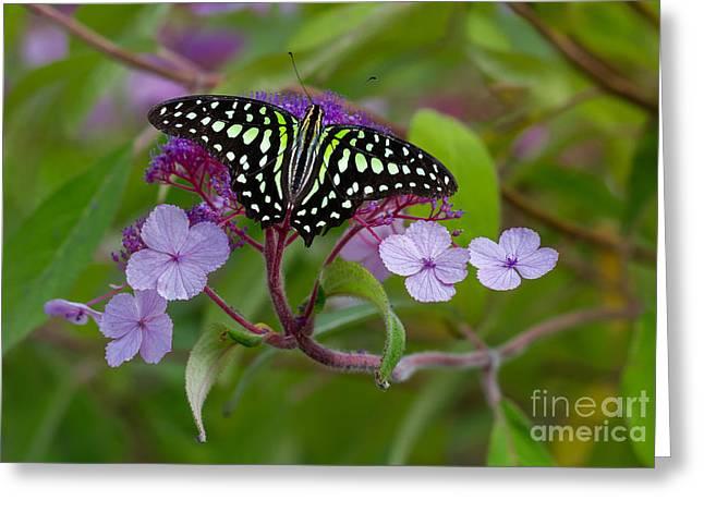 Invertebrates Greeting Cards - Butterfly Greeting Card by Bahadir Yeniceri