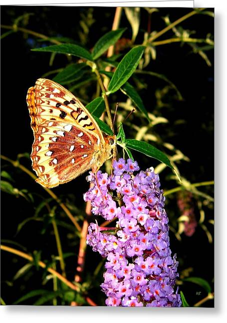 Intrigue Greeting Cards - Butterfly Banquet 2 Greeting Card by Will Borden