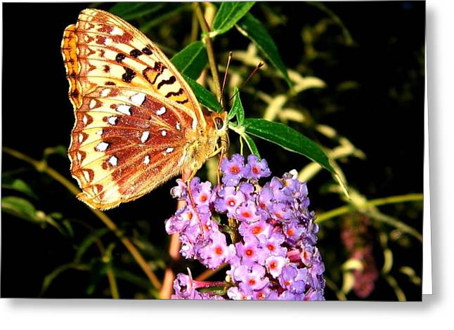 Butterfly Banquet 2 Greeting Card by Will Borden