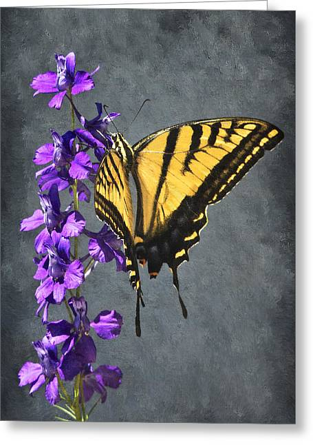 Fushia Greeting Cards - Butterfly Beauty Greeting Card by Priscilla Burgers