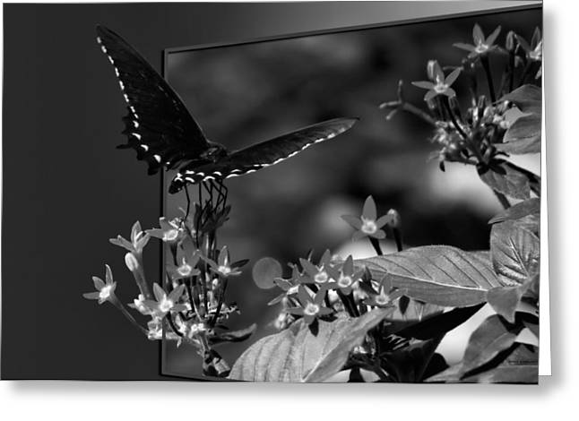 Pinks And Purple Petals Photographs Greeting Cards - Butterfly Black 06 BW Greeting Card by Thomas Woolworth