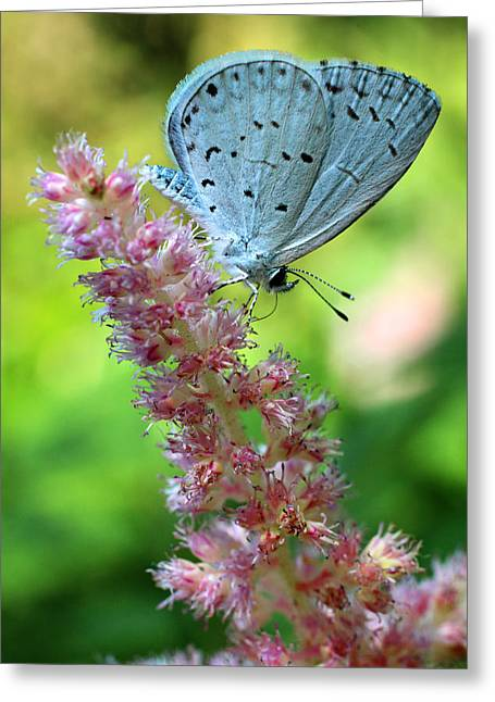 Emergence Greeting Cards - Butterfly Blue Greeting Card by Jeffrey Foltice
