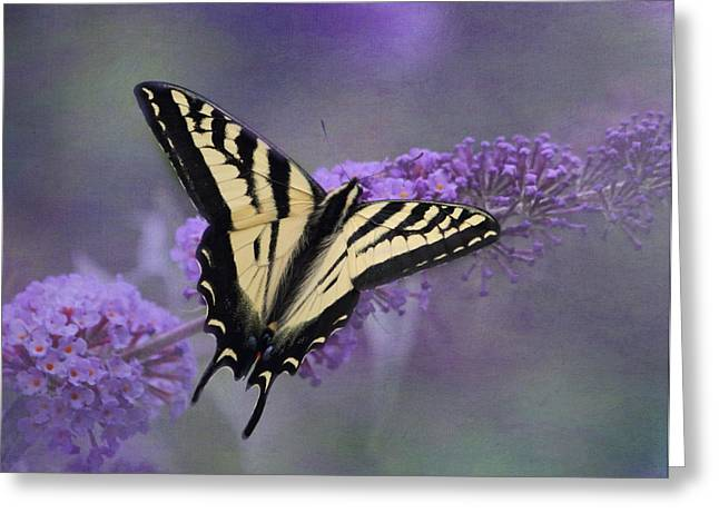 Butterfly On Flower Greeting Cards - Butterfly Bush Greeting Card by Angie Vogel