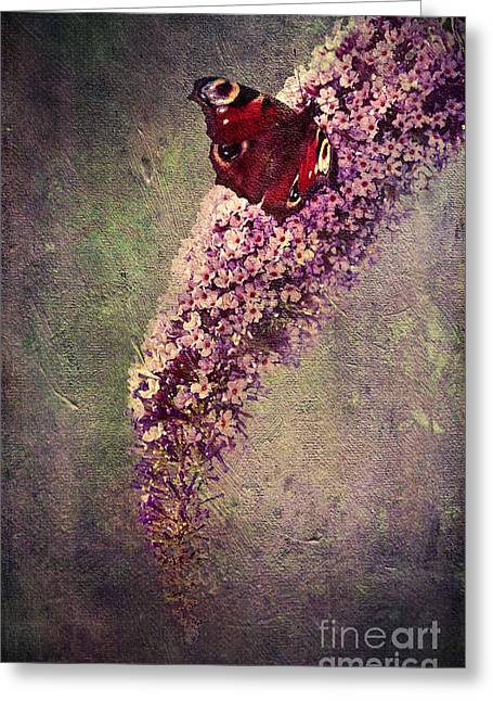 Delicate Mixed Media Greeting Cards - Butterfly Bush Greeting Card by Svetlana Sewell