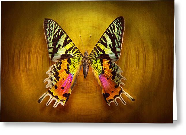 Lepidopterist Greeting Cards - Butterfly - Butterfly of happiness  Greeting Card by Mike Savad