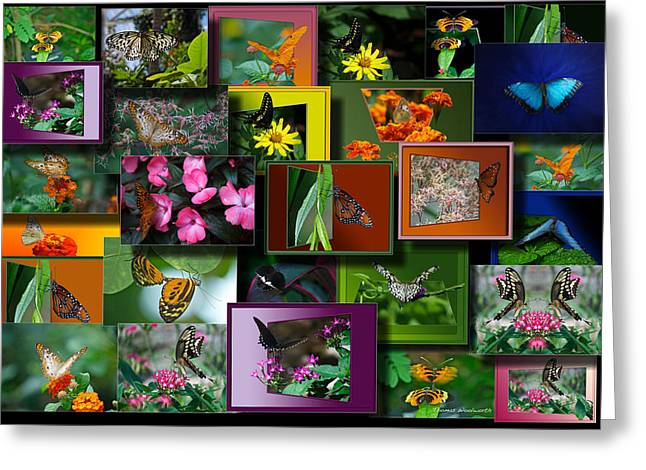 Coller Greeting Cards - Butterfly Collage Rectangle Greeting Card by Thomas Woolworth