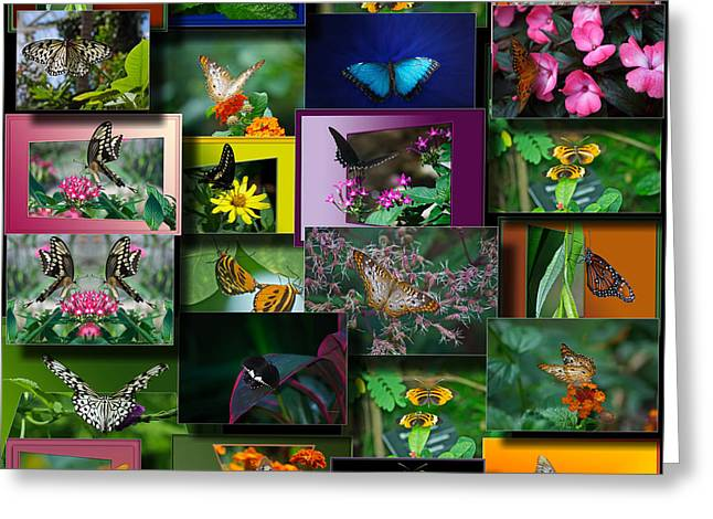 Coller Greeting Cards - Butterfly Collage Square Greeting Card by Thomas Woolworth
