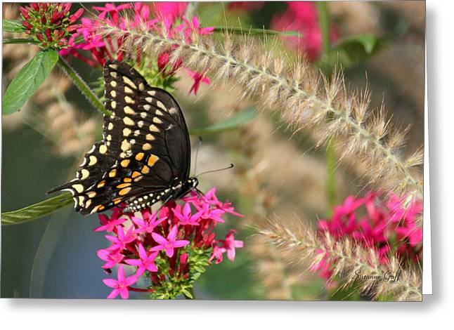 Butterfly Days Greeting Card by Suzanne Gaff