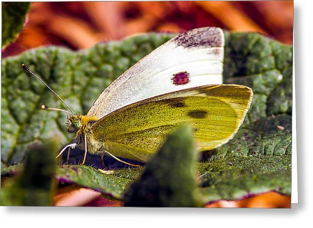 Macro Tapestries - Textiles Greeting Cards - Butterfly Greeting Card by Dennis Bucklin