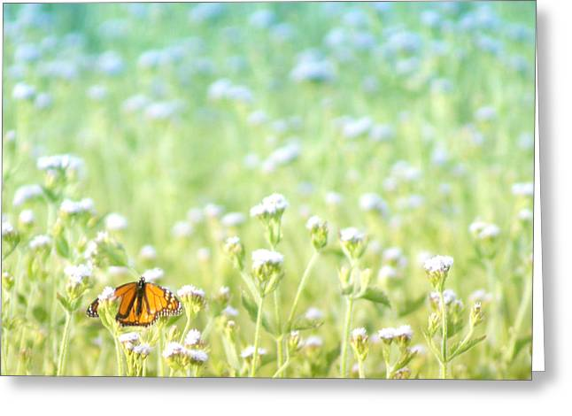 Insect Digital Art Greeting Cards - Butterfly Dreams Greeting Card by Holly Kempe