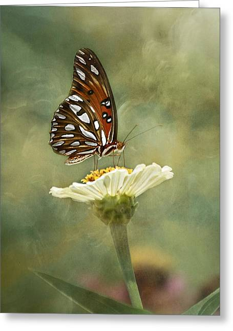 Gulf Coast States Greeting Cards - Butterfly Dreams Greeting Card by Kim Hojnacki