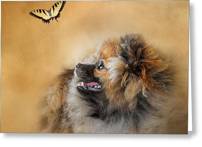 Artistic Photography Greeting Cards - Butterfly Dreams - Pomeranian Greeting Card by Jai Johnson