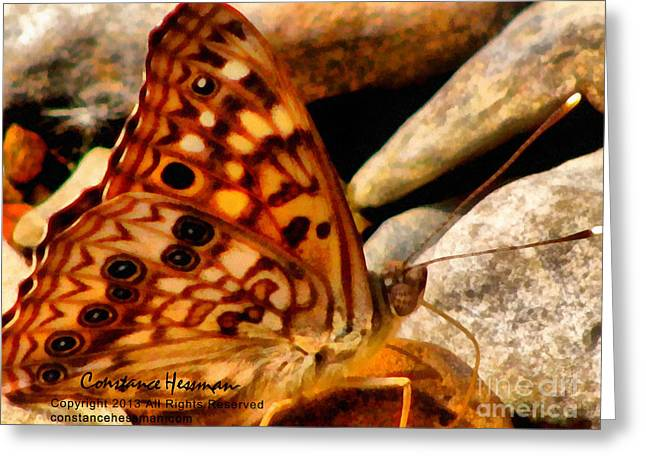 Photo-realism Mixed Media Greeting Cards - Butterfly Enchantment Greeting Card by Constance Hessman