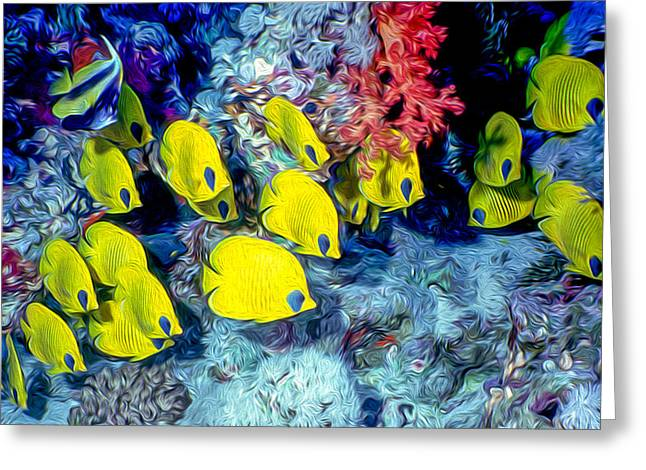 Undersea Photography Greeting Cards - Butterfly Fish Greeting Card by Roy Pedersen