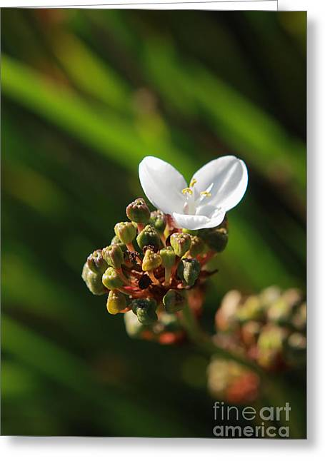 Flora And Fauna Greeting Cards - Butterfly Flower Greeting Card by Aidan Moran