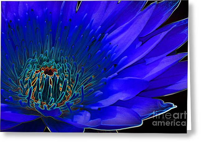 Recently Sold -  - Floral Digital Art Digital Art Greeting Cards - Butterfly Garden 11 - Water Lily Greeting Card by E B Schmidt