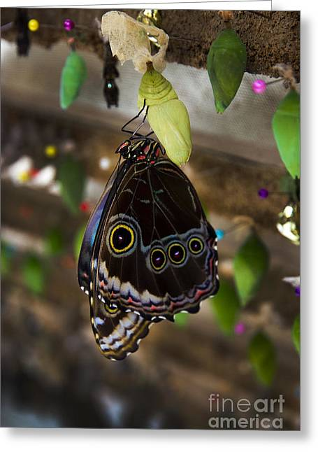 Butterfly Gathering In Mindo Ecuador Greeting Card by Al Bourassa