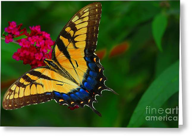 Geraldine Deboer Greeting Cards - Butterfly Greeting Card by Geraldine DeBoer