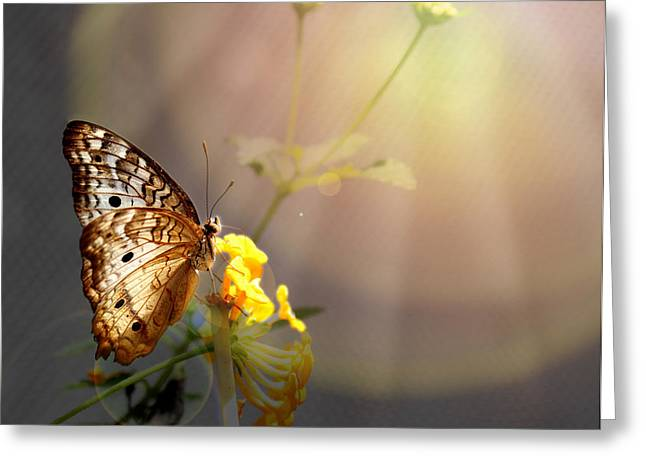 Butterfly Glow Greeting Card by Judy Vincent