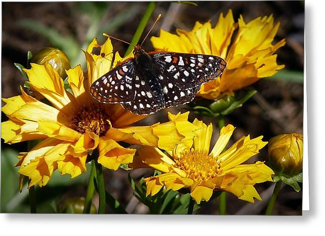 Checkerspot Greeting Cards - Butterfly Heaven Greeting Card by Julia Hassett