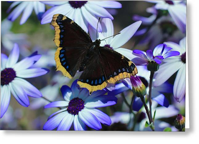 Butterfly In Blue Greeting Card by Heidi Smith