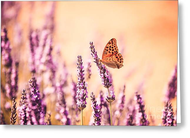 Blooms Butterflies Greeting Cards - Butterfly in lavender field Greeting Card by Matteo Colombo