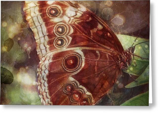 Butterfly in my garden Greeting Card by Barbara Orenya