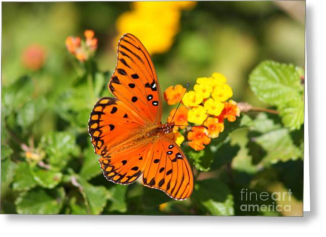 Butterfly In The Glades - Gulf Fritillary Greeting Card by Christiane Schulze Art And Photography