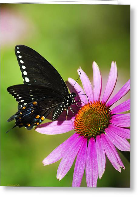 Love The Animal Greeting Cards - Butterfly In The Sun Greeting Card by Christina Rollo