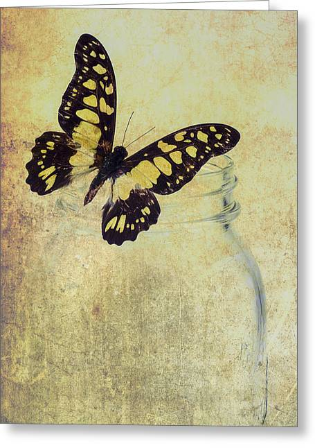 Jar Greeting Cards - Butterfly Jar Abstract Greeting Card by Garry Gay