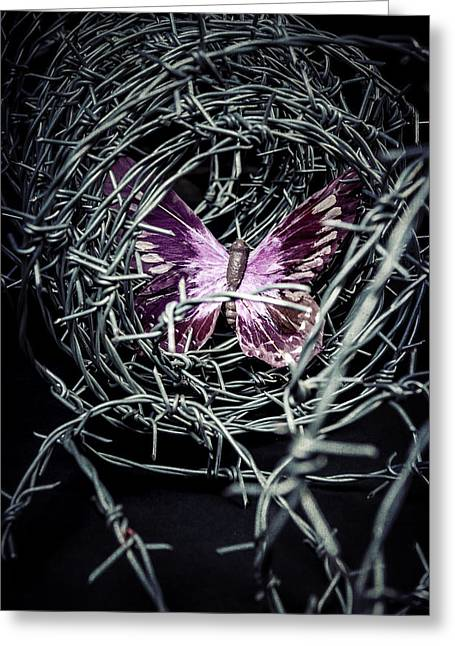 Violiating Greeting Cards - Butterfly Greeting Card by Joana Kruse
