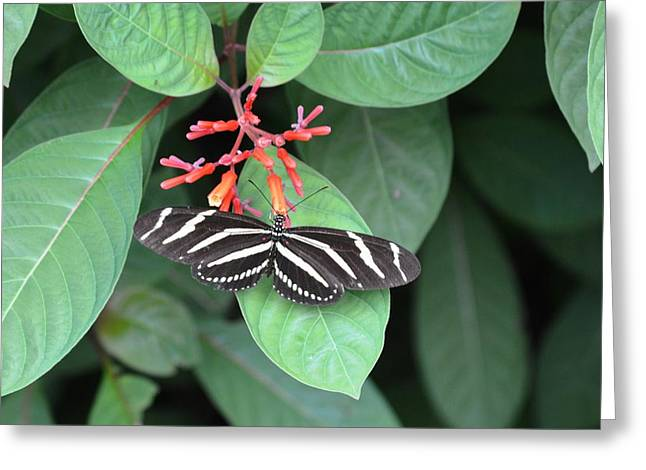Sec Greeting Cards - Butterfly Greeting Card by Kent Brown
