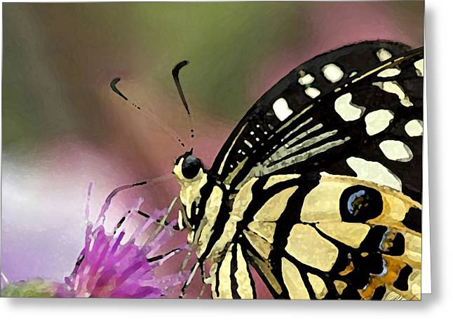 Cole Drawings Greeting Cards - Butterfly Kisses Greeting Card by Cole Black