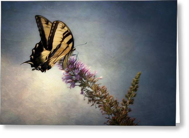 Jeff Burton Greeting Cards - Butterfly Landing Greeting Card by Jeff Burton