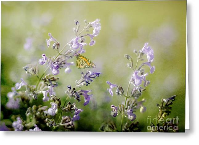 Butterfly On Lavender Greeting Cards - Butterfly Greeting Card by Linde Townsend