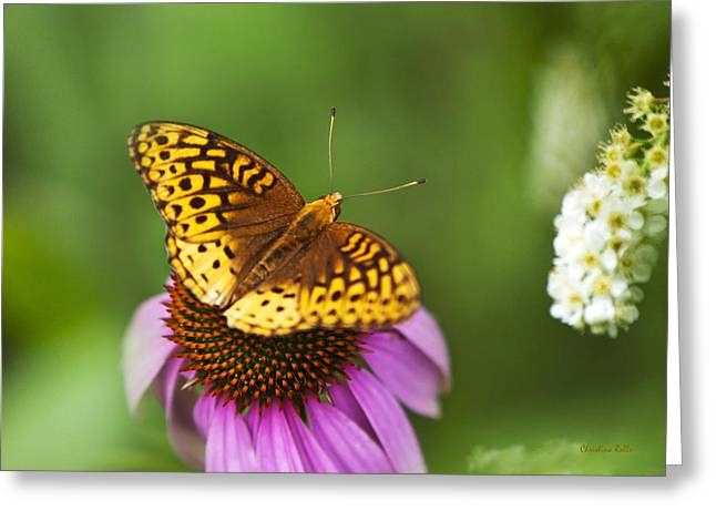 Butterfly On Flower Greeting Cards - Butterfly Love Greeting Card by Christina Rollo