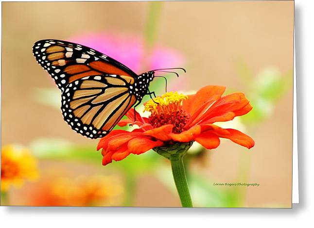 Garden Scene Pyrography Greeting Cards - Butterfly Lunch Greeting Card by Lorna Rogers Photography