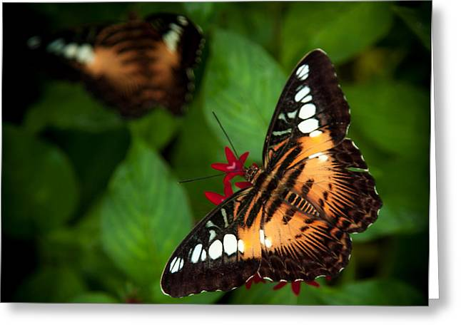 Golds Reds And Greens Greeting Cards - Butterfly Delight Greeting Card by Karen Wiles
