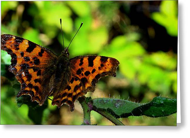 Digitalart Greeting Cards - Butterfly Greeting Card by Martin Newman