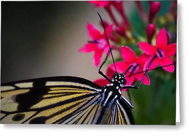 Matt Owen Greeting Cards - Butterfly Greeting Card by Matt Owen