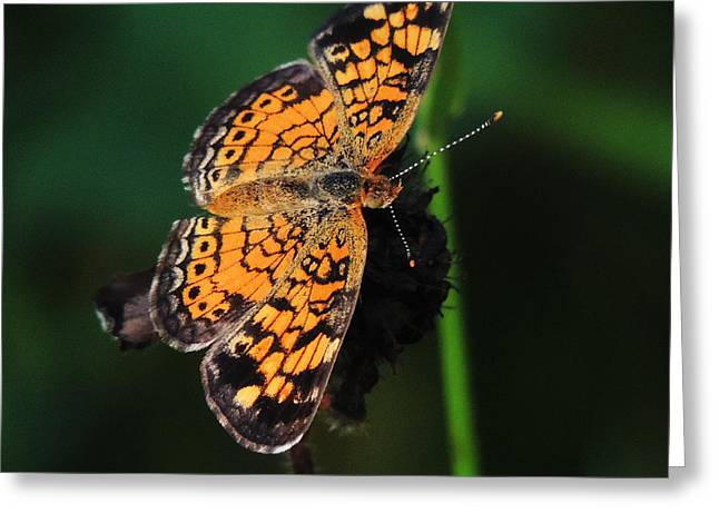 Science Greeting Cards - Butterfly Greeting Card by Matthew Gotski