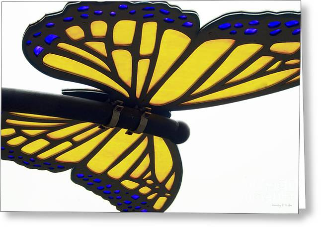 Stein Greeting Cards - Butterfly Greeting Card by Nancy E Stein