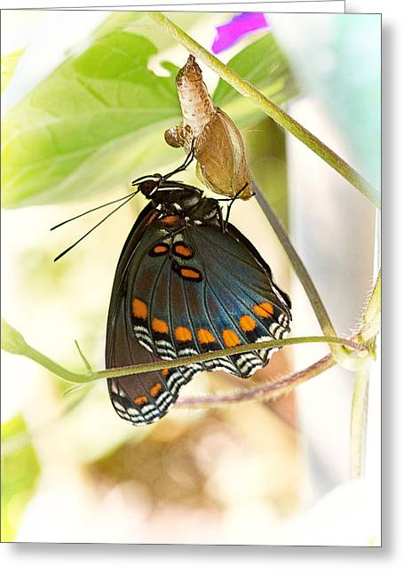 Cocoon Greeting Cards - Butterfly Nursery Greeting Card by Jon Woodhams