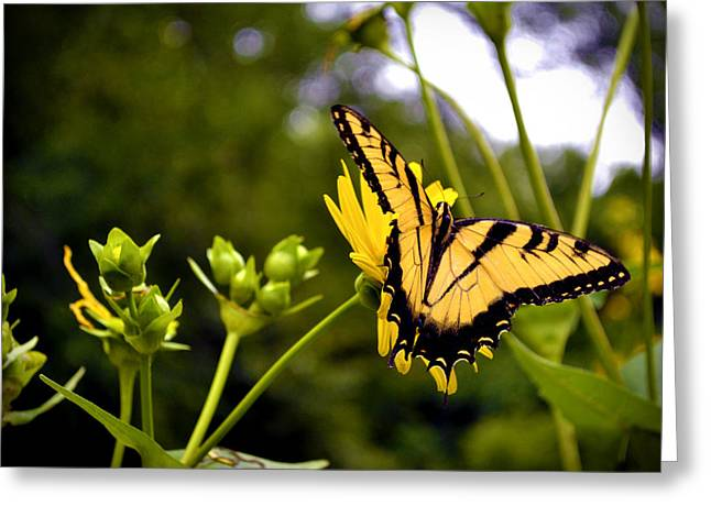 Green Day Greeting Cards - Butterfly on a Flower Greeting Card by Richelle Munzon