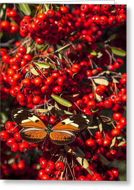 Antenna Greeting Cards - Butterfly on berry bush Greeting Card by Garry Gay